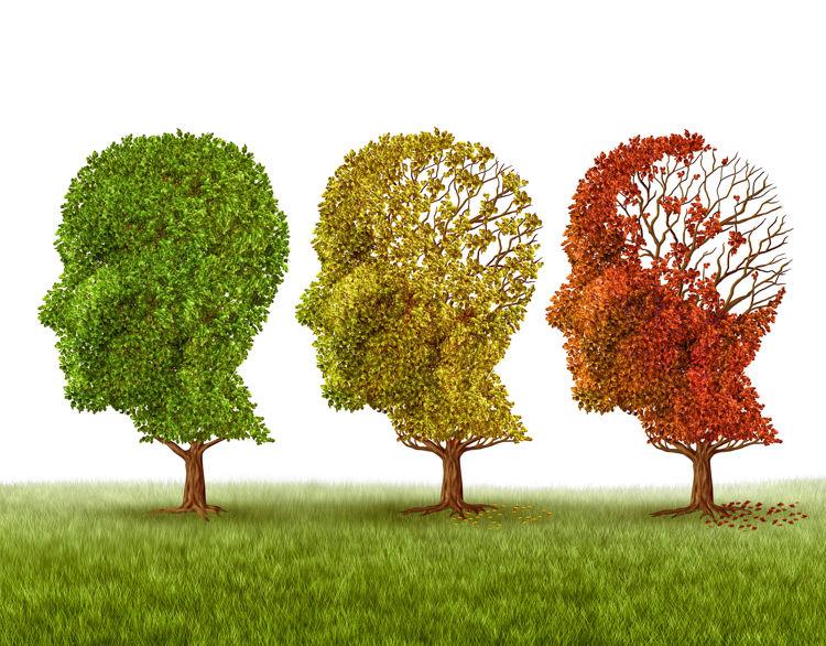 Einfluss von CBD auf Gedächtnis und Konzentration