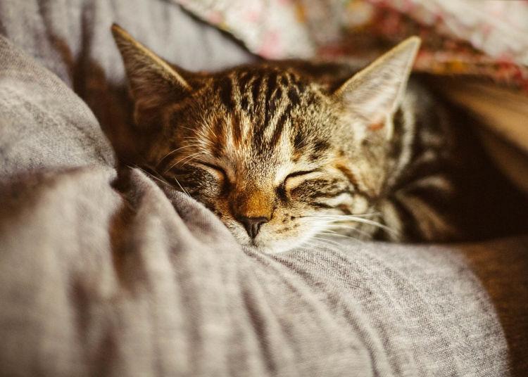 Hanftropfen für Katzen